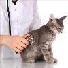 Ветеринарные клиники в Барятино